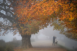 © Licensed to London News Pictures. 08/11/2019. London, UK. A dog walker stop to take a picture of autumnal colours in a fog covered landscape at Richmond Park in west London on cold morning. Parts of the north of England have experienced severe flooding following torrential rainfall. Photo credit: Ben Cawthra/LNP