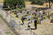 Students process a staged crime scene in the campus garden during a Forensic Science final project at Milpitas High School in Milpitas< California, on May 17, 2016. (Stan Olszewski/SOSKIphoto)