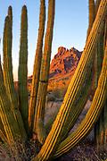 Montezuma's Head Framed by Organ Pipe Cactus, Organ Pipe Cactus National Monument, Pima County, Arizona