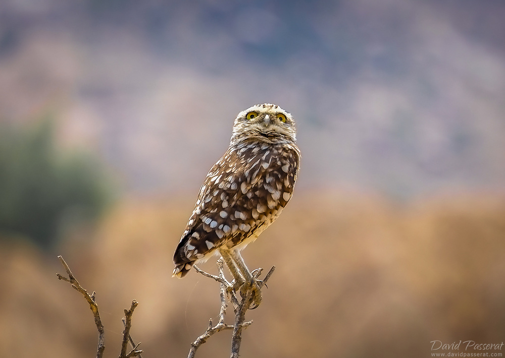 Owl on a branch.
