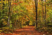 Autumn colors on country road<br /> Haliburton<br /> Ontario<br /> Canada