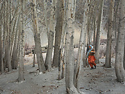 A woman brings apples that have been  kept for winter. Going to get wood for cooking and heating in Khuramabad, a winter pasture two hour walk from Passu village, across the Hunza valley riverbed.