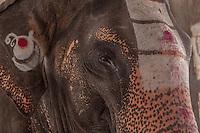 Lakshmi, the temple elephant at Virupaksha Temple, Hampi, India
