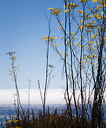 Yellow summer wildflowers line the cliffs, as fog rests along the horizon of the deep blue Pacific Ocean waves off of the California coast of Big Sur