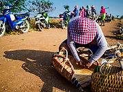 20 FEBRUARY 2019 - BAN LAEM, PHETCHABURI, THAILAND: A salt worker gets ready to go into the fields on one of the first days of the 2019 salt harvest in Ban Laem, Thailand. Ban Laem's salt fields are expanding because salt harvesters in Samut Sakhon and Samut Songkhram,  which are closer to Bangkok, are moving to Ban Laem as their land is turned into industrial parks.     PHOTO BY JACK KURTZ