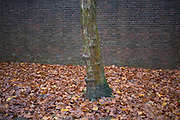 Fallen leaves at the base of a tree trunk in front of a brick wall during Autumn. Texture and autumnal colour of rust and brown dominate this wet scene.