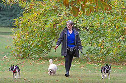 ©Licensed to London News Pictures 30/09/2020  <br /> Greenwich, UK. A dog walker. A grey autumnal weather day today in Greenwich park, Greenwich, London. Photo credit:Grant Falvey/LNP