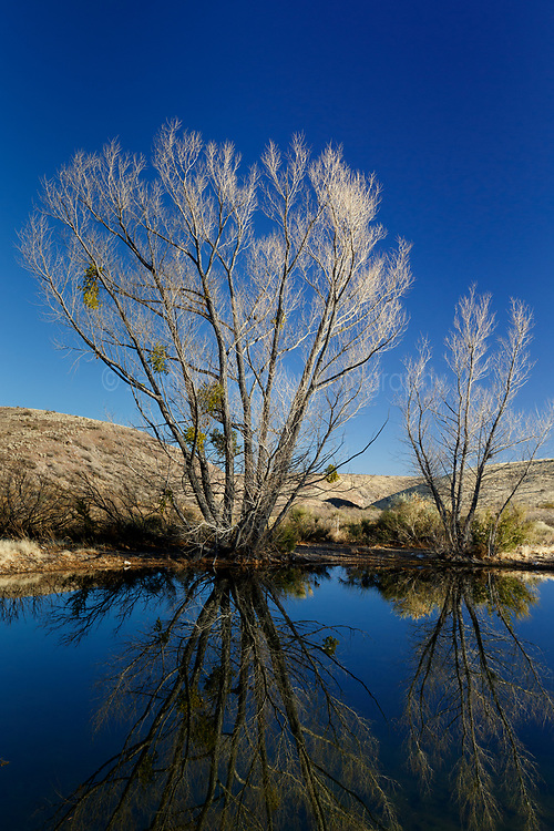 Winter trees and reflections at edge of pondLadder Ranch, west of Truth or Consequences, New Mexico, USA.