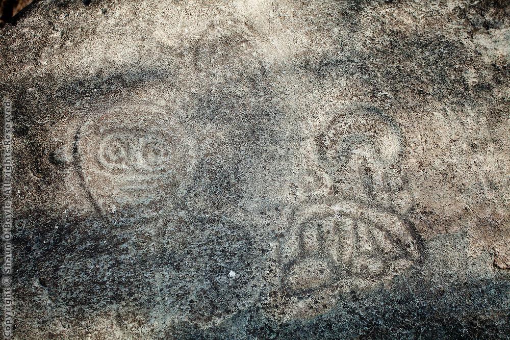 Tiano petroglyphs on reef bay hike, St John, USVI