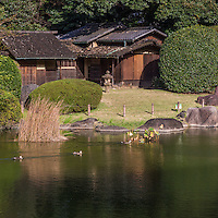 Tokyo National Museum Garden adds seasonal color to Ueno as it is abloom with flowers each season. During short periods in spring and autumn it is open to the public. Five historic teahouses are the highlight of the garden - and are available for tea ceremony and other events by booking in advance.