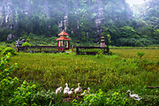 White birds in a green field with a red place of worship in the background with limestone Rock Formations. This area is used for Folk Lore & worshiping God