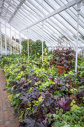 The sweet potato trial at West Dean