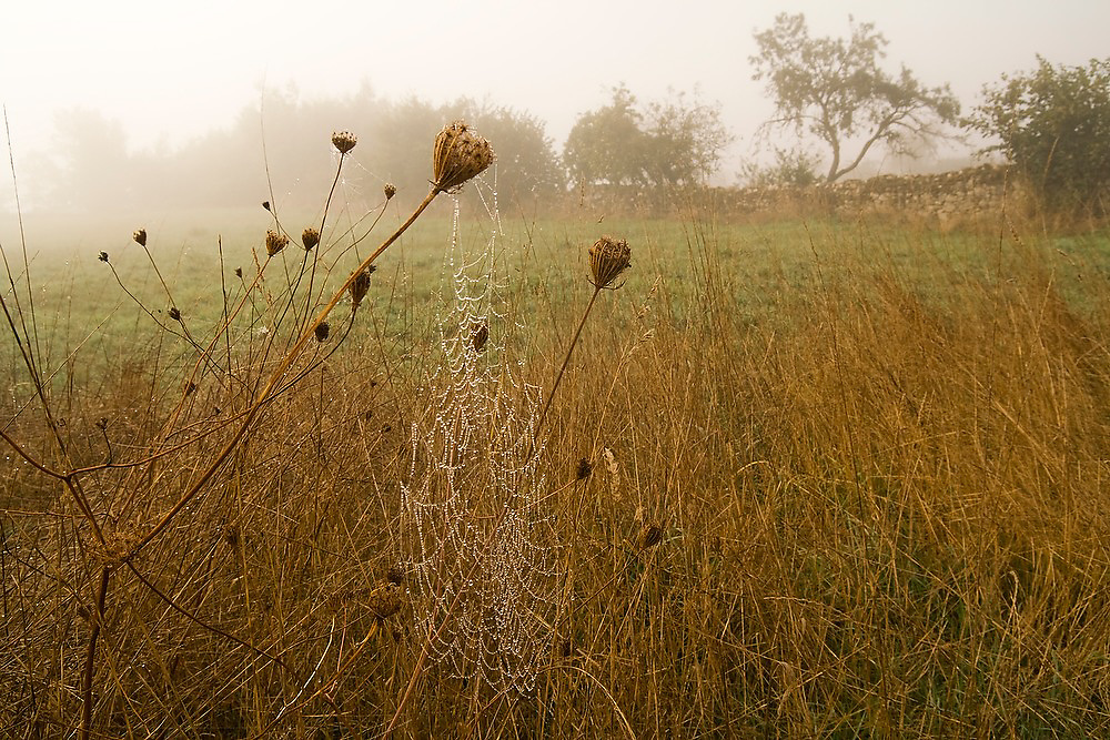 A cobweb hangs from plants in a field, glistening with water droplets at sunrise on the Camino de Santiago pilgrimage between Sarria and Portomarin, Galicia, Spain.