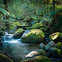 Taggarty Cascades, Yarra Ranges National Park, Victoria, Australia.