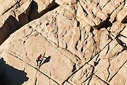 A rock climber free climbs The Dome in Boulder Canyon, near Boulder, Colorado.