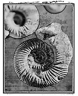 Solaroid - Shells - Ammonite 1 - This is a solarised polaroid photo art print by Paul Williams who invented the technique and is the only photographer to have used it. The process is sadly no longer possible. Taken in 1989,