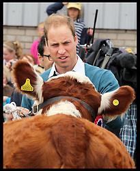 The Duke of Cambridge at the cattle judging  during his visit to the Anglesey Show in North Wales, United Kingdom. Wednesday, 14th August 2013. Picture by Stephen Lock / i-Images