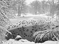 The Pool in Central Park during a snow storm.
