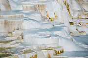 Canary Spring, Upper Terrace Drive, Mammoth Hot Springs. Yellowstone National Park, Wyoming, USA.