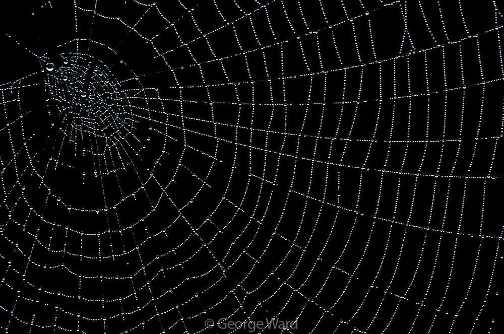 Spider Web, Sausalito,Marin County, California