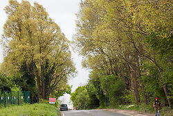 Harefield, UK. 27th April 2019. Environmental activists from Colne Valley Action sit in trees alongside Harvil Road to prevent their felling as part of work scheduled for this weekend for the HS2 project. The Colne Valley is an area of natural beauty and large areas of trees have been felled there for HS2 in recent weeks. Protesters based at the Harvil Road Wildlife Protection Camp are seeking to prevent further destruction.