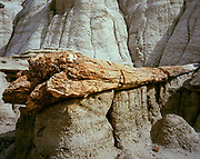 Petrified log eroded from the 50 million-year-old Fruitland Formation, Bisti Badlands, Bisti/De-Na-Zin Wilderness, San Juan Basin, New Mexico.