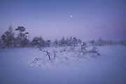 Blue hour over frozen lake in snow covered raised bog with moon still in sky, Kemeri National Park (Ķemeru Nacionālais parks), Latvia Ⓒ Davis Ulands | davisulands.com