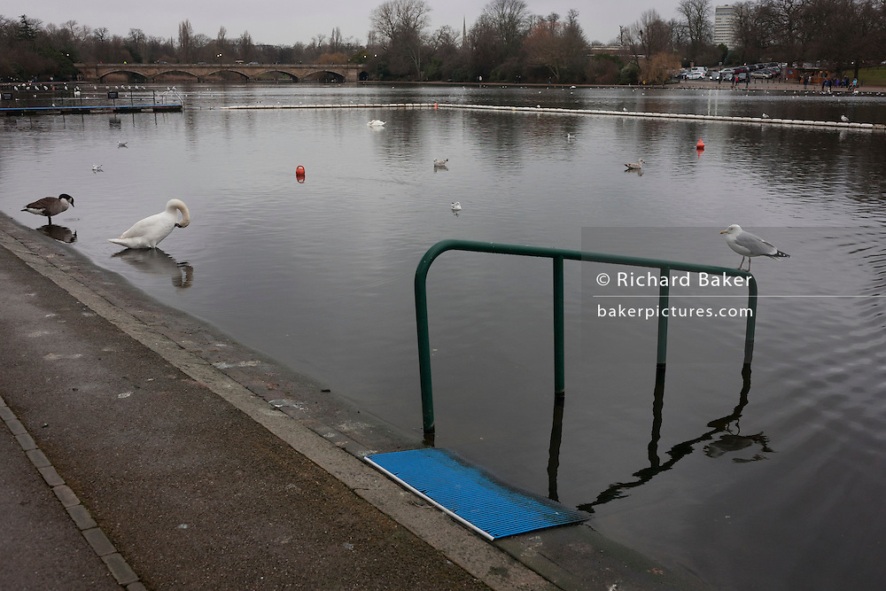 Bird wildlife and a swimmers' rail leading into the still waters of the Serpentine pond, on 1st January 2017, in central London, England.