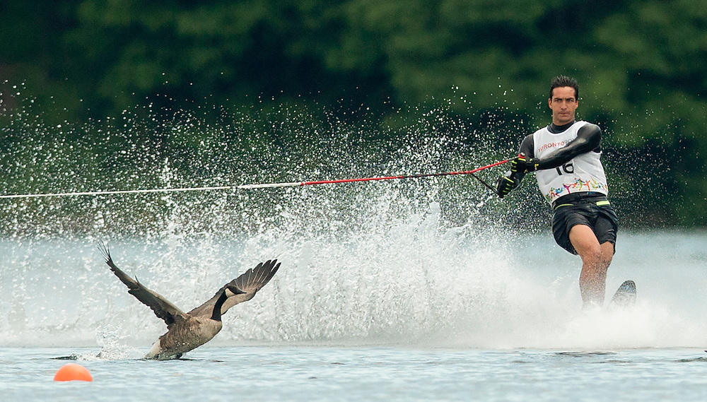 Felipe Miranda of Chile is interrupted by a goose during the men's waterski slalom preliminary round at the Pan Am Games in Toronto, Monday July 20, 2015.  Miranda was able to re-do his run as the geese interfered with his run.  THE CANADIAN PRESS/Mark Blinch