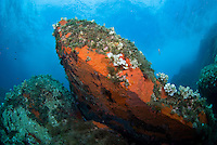 Rock encrusted with colourful sponges, and algae, in turbulent seas<br /> France: Corsica, Cerbicale Islands