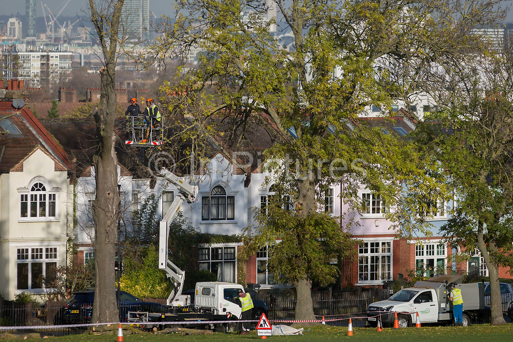 Tree surgeons take down a dead 100 year-old ash tree from opposite suburban houses on Ruskin Park, a green space overlooking the capital in the London borough of Lambeth, on 13th November 2019, in London, England.