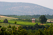 Vineyard. The watch tower. Kir-Yianni Winery, Yianakohori, Naoussa, Macedonia, Greece