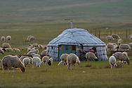 Mongolian Shepherd's tent or Yurt and grazing sheep, Bayanbulagu Gatcha, grassland steppe, Inner Mongolia, China