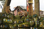 Monkeys can be found everywhere in Kathmandu, from the city central to the entrance to Swayambunath Stupa, a few kilometers away.