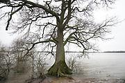 Nederland, Overbetuwe, 15-3-2020 Het water in de rivier de Waal staat hoog. Uiterwaarden zijn ondergelopen, staan onder water . Foto: Flip Franssen