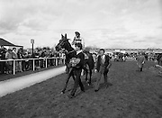 Irish Grand National At Fairyhouse.  (R54)..1987..20.04.1987..04.20.1987..20th April 1987..The Easter Racing Festival at Fairyhouse included the running of the Jameson sponsored Irish Grand National. Another featured race was the Jameson Gold,Jameson's, Irish, Whiskey, jameson,  Cup which was also run on Easter Monday...Image shows 'Wolf of Badenoch' being led to the unsaddling enclosure after winning the Jameson Gold Cup.