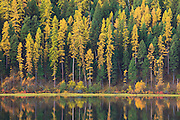 Tamaracks on Salmon Lake, Montana
