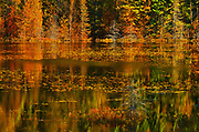 Wetland along the boreal forest<br />Lake Superior Provincial Park<br />Ontario<br />Canada