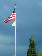 tree saluting a flag