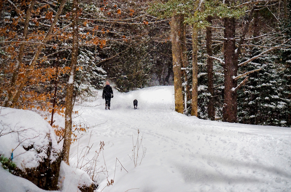 A walk in the woods in winter with a dog along a trail in Maine.