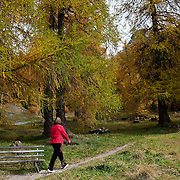 BOLZANO, ITALY - OCTOBER 14: A woman walks in a wood in Solda that as Autumnal colours appear on October 14, 2010 in Bolzano, Italy. Italy is currently enjoying the final warm spells of the summer,however, theshortening daylight hours and cooler weather is bringing Autumn foliage colours across the country.