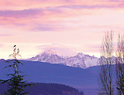 bird perched on branch with sunrise on Mt. Baker in the distance, Washington State