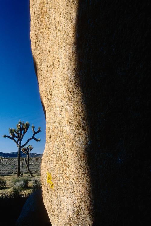 Lost Horse Valley shadows, March, Joshua Tree National Park, California, USA