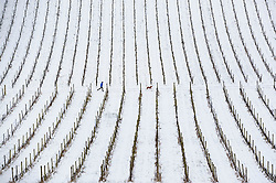 **2018 Pictures of the year by London News Pictures**<br /> © Licensed to London News Pictures. 18/03/2018. Dorking, UK. A jogger runs through the vines at Denbies Vineyard after overnight snow and freezing temperatures. Amber weather warnings remain in place for parts of the UK for a second day. Photo credit: Peter Macdiarmid/LNP