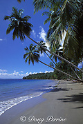 Samana Bay, Dominican Republic ( Caribbean Sea )