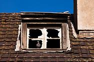 Europa, Deutschland, Nordrhein-Westfalen, Koeln, Taube in einem Fenster eines alten leerstehenden Hafengebaeudes im Deutzer Hafen.<br /> <br /> Europe, Germany, North Rhine-Westphalia, Cologne, pigeon in a window of an old abandoned harbor building in the harbor Deutz.