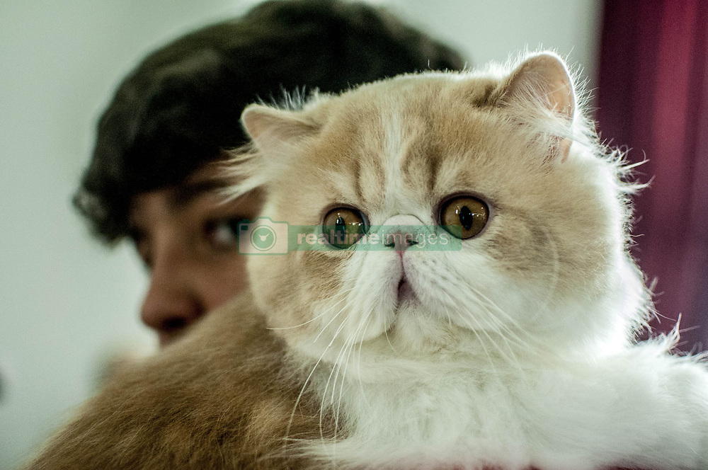 July 26, 2018 - Sao Paulo Brazil - Cat Club Exhibition: The cat exhibit took place this Thursday at Clube do Gato, with 250 cats from 21 different breeds. (Credit Image: © Cris Faga via ZUMA Wire)