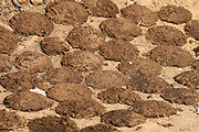 India, cow dung used as a fuel for fire