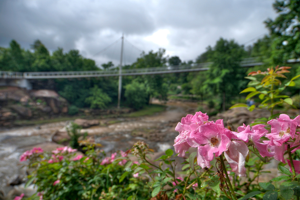 A cloudy morning in Falls Park on the Reedy in Greenville, SC on Monday, June 5, 2017. Copyright 2017 Jason Barnette