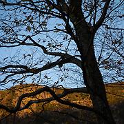 Reaching Tree